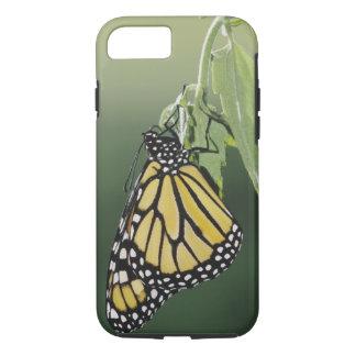 Monarch, Danaus plexippus, adult newly emerged iPhone 8/7 Case