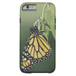 Monarch, Danaus plexippus, adult newly emerged iPhone 6 Case
