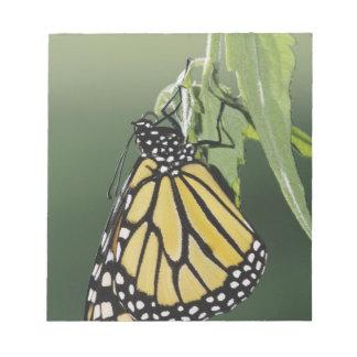 Monarch, Danaus plexippus, adult newly emerged Notepad