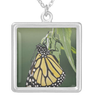 Monarch, Danaus plexippus, adult newly emerged Silver Plated Necklace