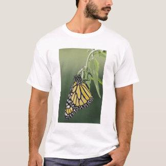 Monarch, Danaus plexippus, adult newly emerged T-Shirt