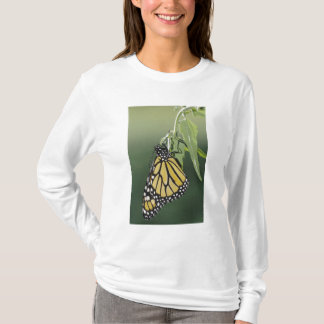 Monarch, Danaus plexippus, adult newly emerged T-Shirt
