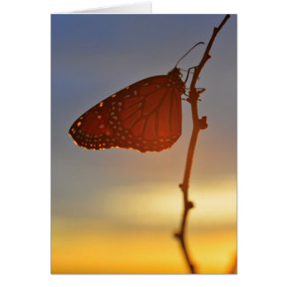 Monarch in the Morning Light Card
