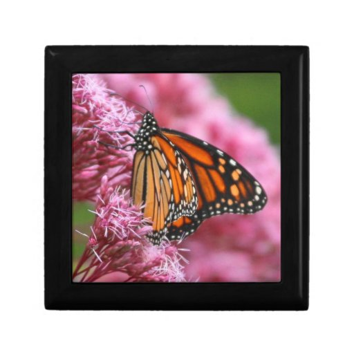 Monarch in the Weeds jewelry box