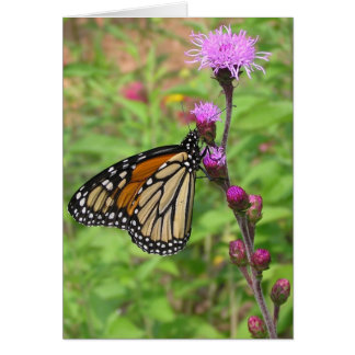 Monarch/Liatris Card