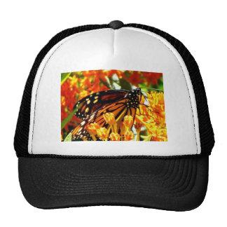 Monarch Madness.jpg Hat