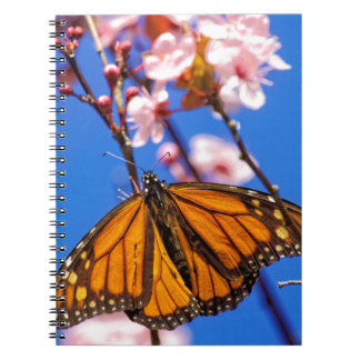 Monarch on Cherry Blossom Note Book
