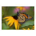 monarch on flower stationery note card