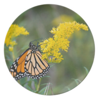 Monarch on Goldenrod Plate