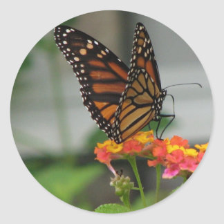 Monarch on Lantana Sticker