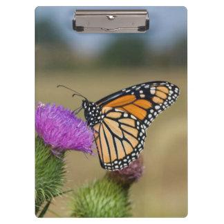 Monarch on pasture Thistle Prairie Ridge Clipboard
