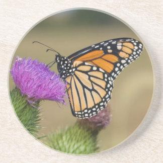 Monarch on pasture Thistle Prairie Ridge Coaster
