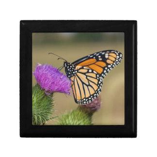Monarch on pasture Thistle Prairie Ridge Gift Box