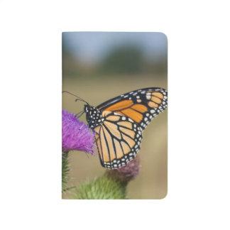 Monarch on pasture Thistle Prairie Ridge Journal