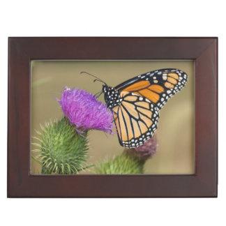 Monarch on pasture Thistle Prairie Ridge Keepsake Box