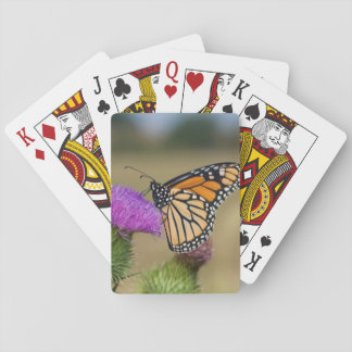 Monarch on pasture Thistle Prairie Ridge Playing Cards