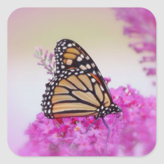 Monarch on Pink - Butterfly Square Sticker