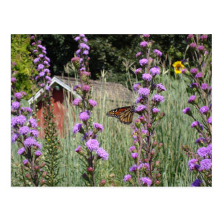 Monarch on the Iowa prairie Postcard