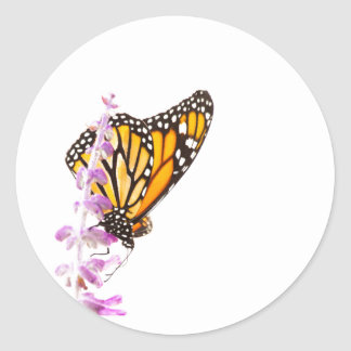 Monarch perched on lavender classic round sticker