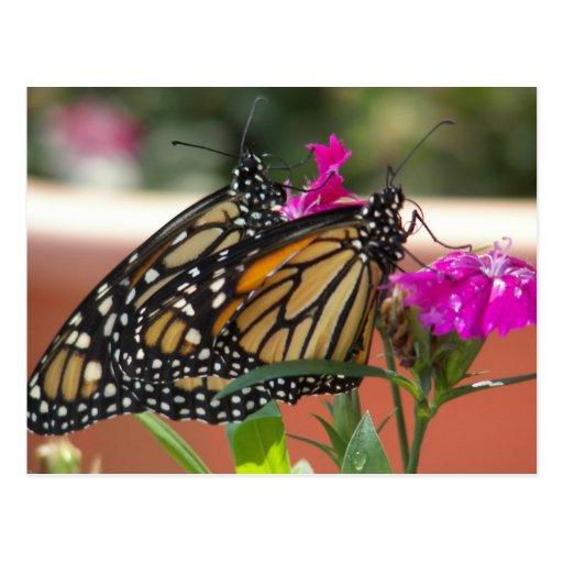 Monarch Twins #1-postcards