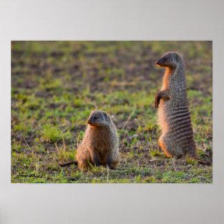 Mongoose on Alert Print