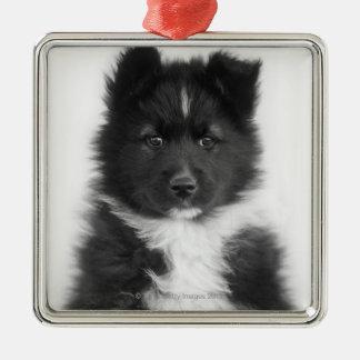 Mongrel Dog, Studio Shot Silver-Colored Square Decoration