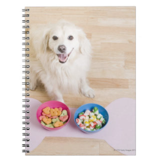 mongrel sitting in front of two bowls with dog notebooks