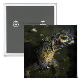 Monitor Lizard (2) Button