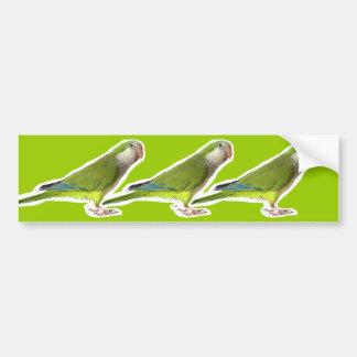 Monk Parakeet Bumper Sticker