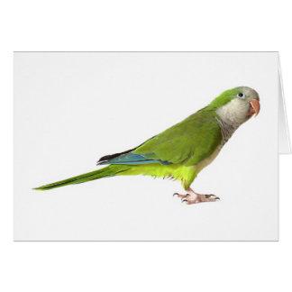 Monk Parakeet Card
