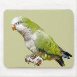 Monk Parakeet Mouse Mats