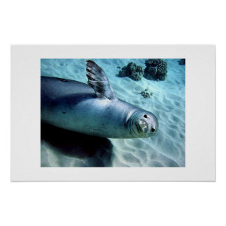 Monk Seal Waves Hello Poster