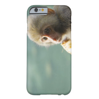 Monkey Barely There iPhone 6 Case