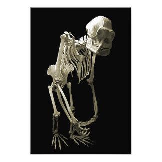 Monkey Body Bones Art Photo