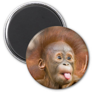 Monkey business 2 magnet