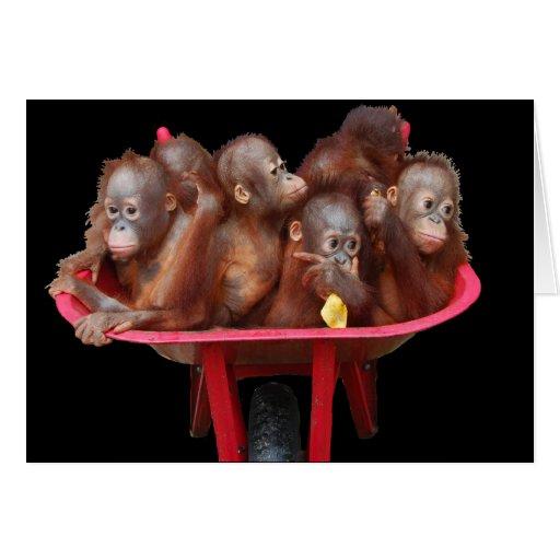 Monkey Business Orangutan Babies Greeting Card