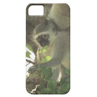 monkey case iPhone 5 case