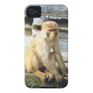 Monkey Case-Mate iPhone 4 Case