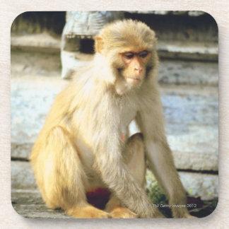 Monkey Coaster