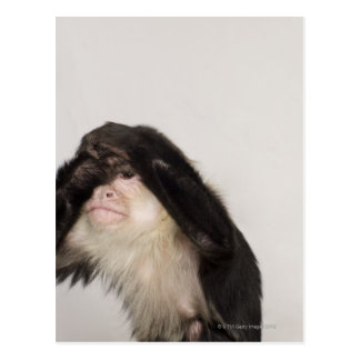 Monkey covering its eyes postcard