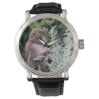 Monkey Daily Pick Watch