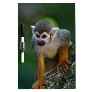 Monkey Dry Erase Board