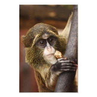 Monkey in a tree art photo