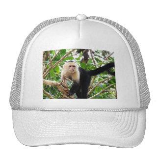 Monkey in Costa Rica Mesh Hats