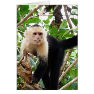 Monkey in Costa Rica Note Card