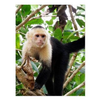 Monkey in Costa Rica Postcard