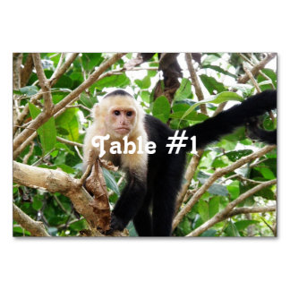 Monkey in Costa Rica Table Cards