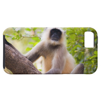 Monkey in jungle of Ranthambore National Park iPhone 5 Cover