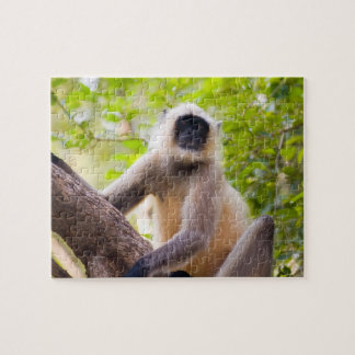Monkey in jungle of Ranthambore National Park Jigsaw Puzzle