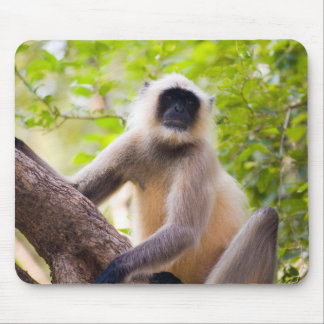 Monkey in jungle of Ranthambore National Park Mouse Mat